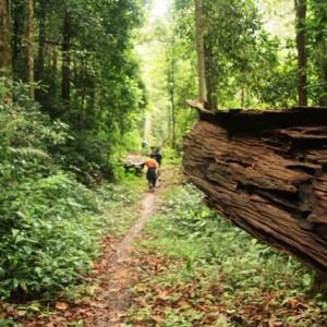 forest com