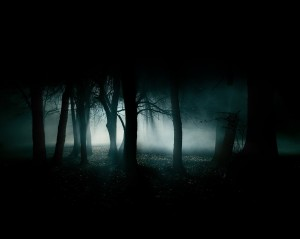 dark-woods-forest-image