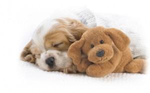Cute-Dogs-Sleeping-640x400