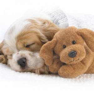 Cute-Dogs-Sleeping-640x400