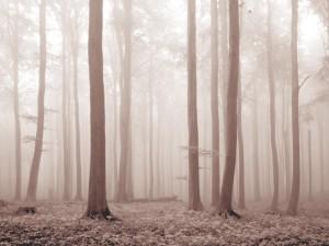 01-melancholy-forest