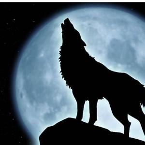 wolf_howling_by_jadewilliamssmith-d39uc6s