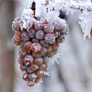 ice-wine-eiswine