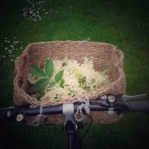 elderflower-2-bike-basket